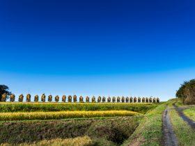 南方の棚田や田園風景