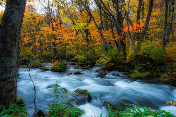 紅葉の時期も格別美しい奥入瀬渓谷