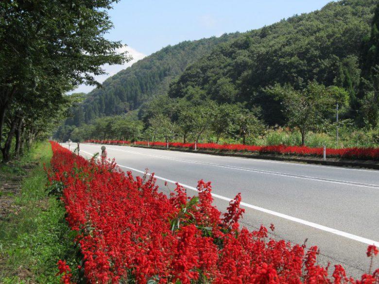 道の駅「桜峠」近くにあるサルビアロード