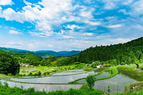 大阪「長谷の棚田」