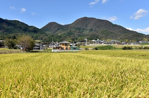 二上山と太子町の田園風景