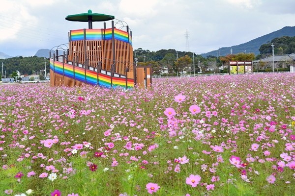 道の駅に隣接する「おうとう花公園」