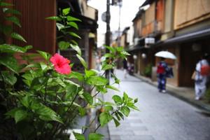 夏の祇園町