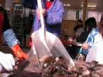 松島の牡蠣