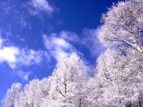 長野 樹氷