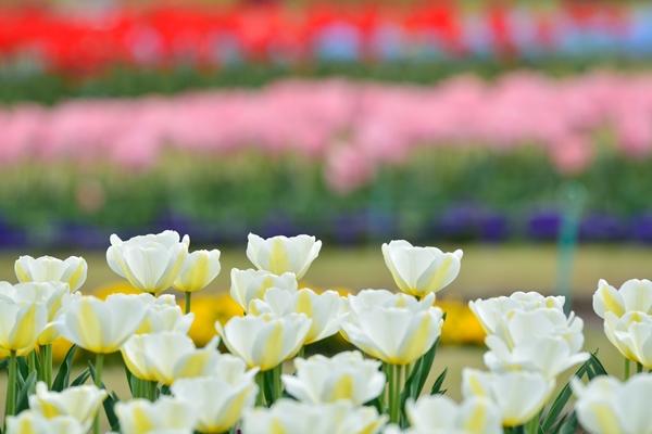 花や植木の街「安行」