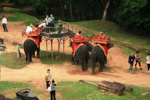 elephant_taxi