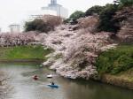 千鳥ヶ淵の桜が見事