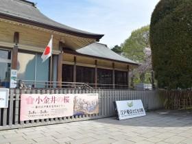特別展「小金井の桜」開催中