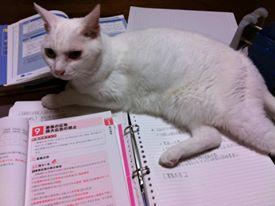 なぜ猫は邪魔をする?