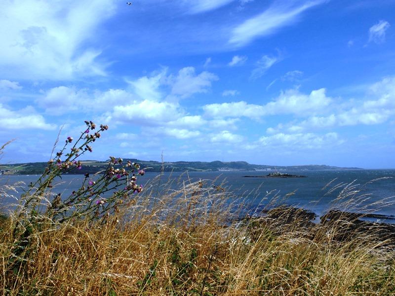 島の西側に広がる草原
