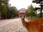 奈良旅行といえば鹿だよね