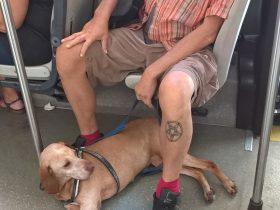 ローマ路線バスに乗る犬