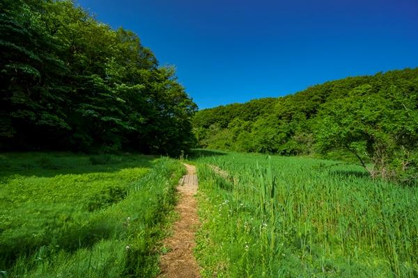 新緑の狭山丘陵 大谷戸湿地