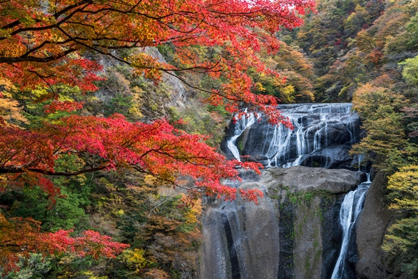 袋田の滝紅葉