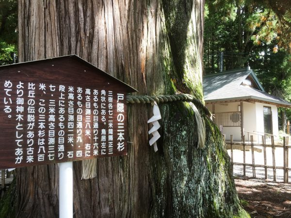 樹齢700年、800年の杉が境内に