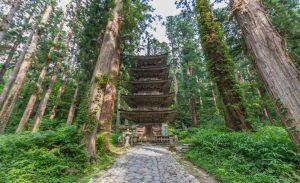 「ミシュラン・グリーンガイド・ジャポン」で三ツ星に選ばれた杉並木