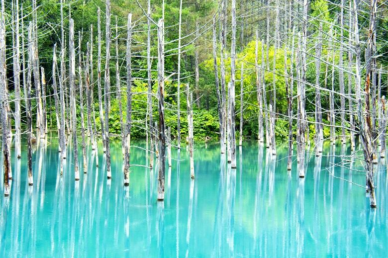 美瑛・白金にある「青い池」