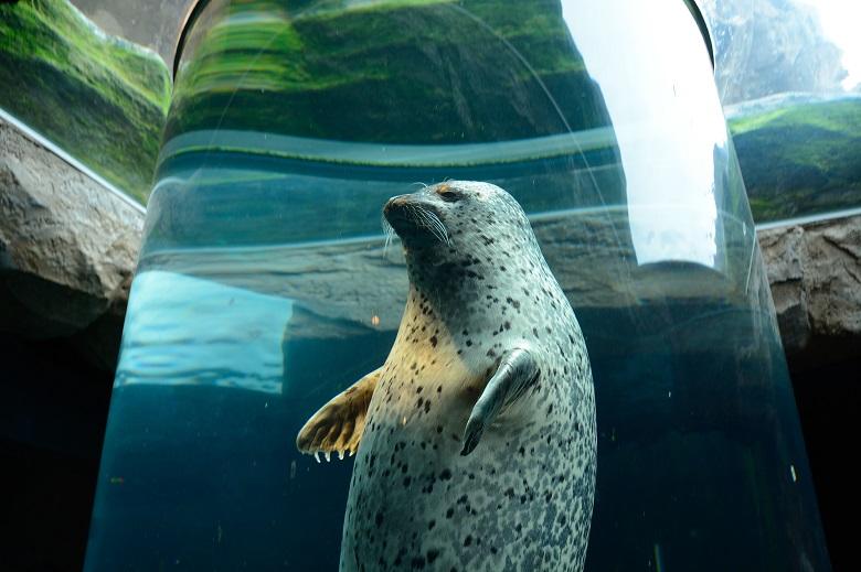 行動展示で有名になった「旭山動物園」