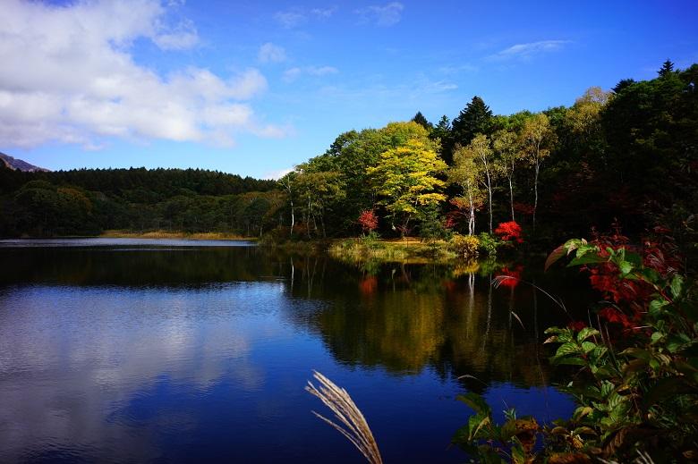 秋の小鳥が池