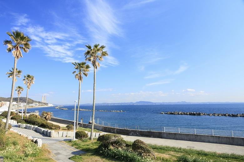温暖な気候の三浦半島