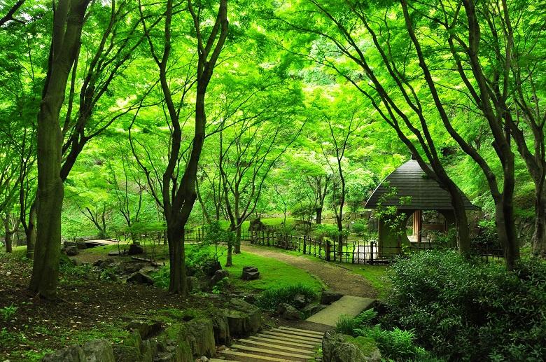 七沢森林公園BBQ場
