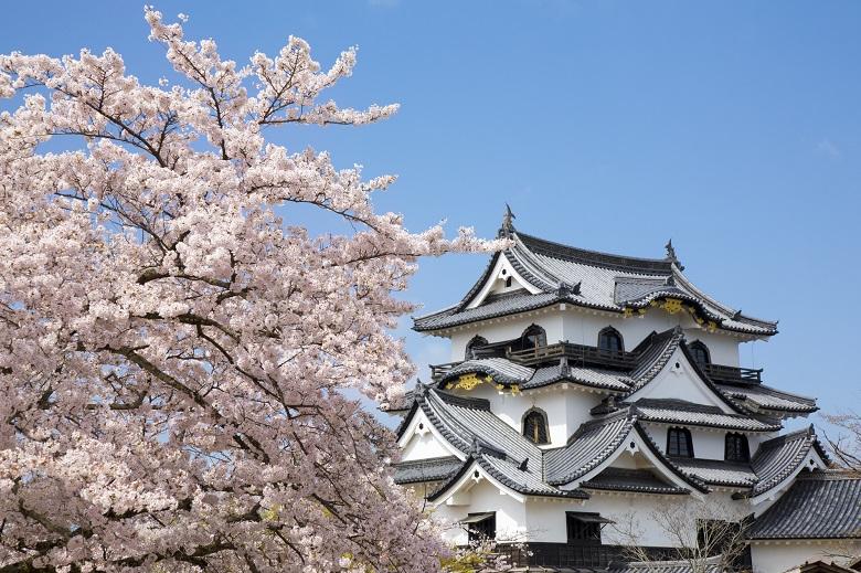 春の彦根城