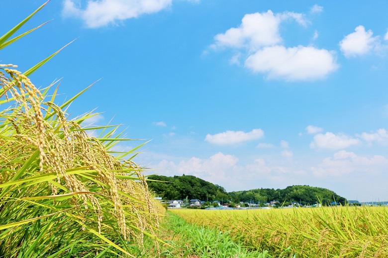 新潟の農業技術などの研究・開発施設視察